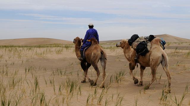 pouštní krajina